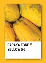 papaya tone yellow color sample design stock photo picture and