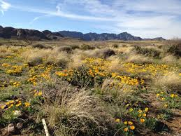 news blog friends of organ mountains desert peaks