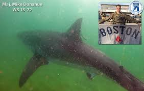 fallen soldiers live on through great white sharks named in their