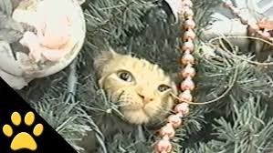 cats in trees compilation