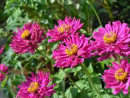spring gardens for beginners in ontario insurance blog