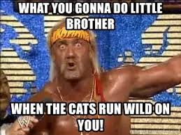 What You Gonna Do Meme - what you gonna do little brother when the cats run wild on you
