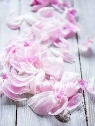 The Pink Peonies by Beautiful Petals Of Pink Peonies On Wood Background Stock Photo