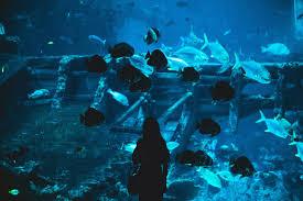 japanese aquarium japanese aquarium forced to close due to lack of visitors