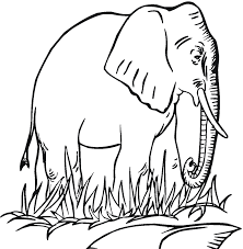 free printable elephant coloring pages for kids elephant printable