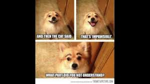 Pomeranian Meme - funny pomeranian memes compilation new october 2017 youtube
