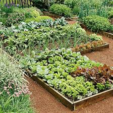 Veg Garden Layout Nobby Home Vegetable Garden Planning A Home Designs