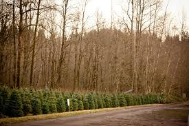 coates tree farms in auburn wa wholesale trees