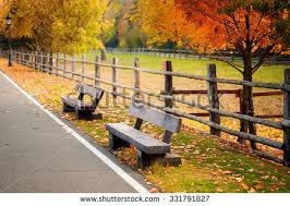 Old Park Benches Old Wooden Bench City Park Natural Stock Photo 331791980