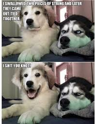 Funny Puppy Memes - here s some funny puppy memes to lighten your day album on imgur