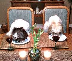 dogs at dinner table the things we do for love our dogs eat at the table with us