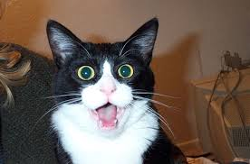 Shock Meme - nyan cat movie cat movie shock meme and nyan cat