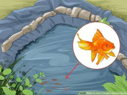 how to add fish to a garden pond 13 steps with pictures