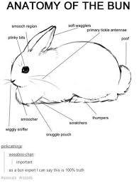 the bun proper anatomy your meme