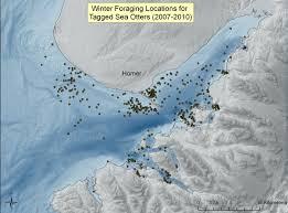 Homer Alaska Map by Doroff A Badjeros O Corbell K Jenski D And Beaver M