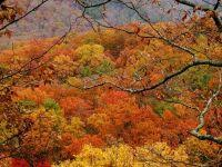 maryland foliage map 2015 fall foliage 2016 color nears peak in central maryland