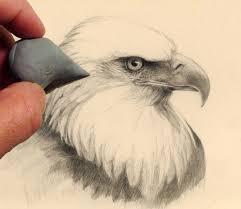 how to draw an eagle head mark bornowski