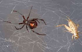 genetic researchers extract sequence dna from spider webs