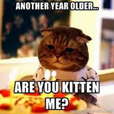 Incredible Meme - incredible funny cat birthday meme ideas best birthday quotes