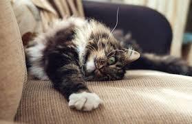 eviter griffe canapé comment éviter que votre abime vos meubles mes animaux