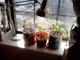 sunny spot how to start a home vegetable garden 1043