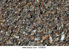 Assorted Seashells Assorted Seashells On Beach In Scotland Stock Photo Royalty Free