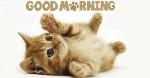 Good Morning Cat Meme - good morning images with cat for whatsapp facebook pinterest