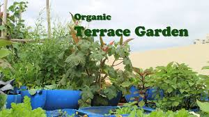 organic terrace garden english youtube