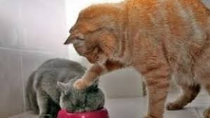 Cat Fight Meme - funny cat meme archives funny animal photo