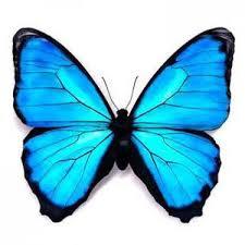 blue 3d butterfly design