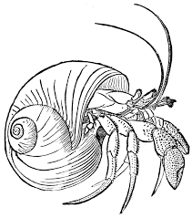 Halloween Hermit Crab Reef Safe by Line Drawings Of Shells Hermit Crab Embroidery Pinterest