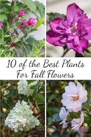 garden of eden flower shop best 25 fall flower gardens ideas on pinterest flowers