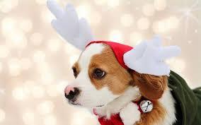 dog christmas christmas dog wallpapers wallpaper cave