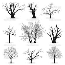 58 best how to draw realistic trees plants bushes and rocks