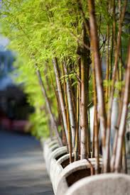 garden design garden design with how to take care of a lucky