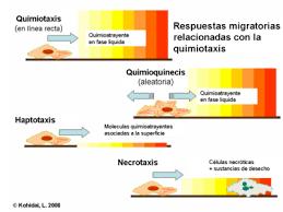 significado de imagenes sensoriales wikipedia quimiotaxis wikipedia la enciclopedia libre