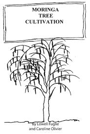 how to grow moringa cultivate plant moringa oleifera trees
