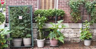 here u0027s what you need to know to grow veggies in pots startribune com