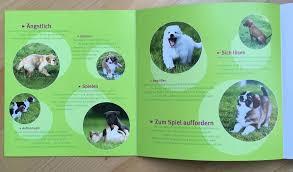 australian shepherd 1 jahr kaufen australian shepherd erziehung tipps