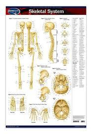 Anatomy Of The Human Body Bones Best 10 Skeletal System Ideas On Pinterest Anatomy Anatomy Of