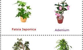 memorable model of giant planters finest online plant nursery