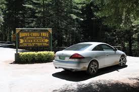 Chandelier Drive Through Tree Chandelier Tree Drivenfordrives