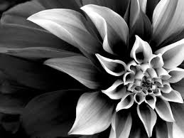 real flowers black and white real flowers many flowers