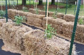 straw bale garden take 2 scene 1 garden culture magazine
