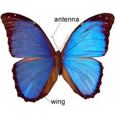 butterfly meaning of butterfly in longman dictionary of