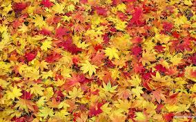 halloween fall repeating background fall leaves background wallpapersafari