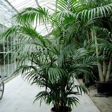 indoor palm indoor hashtag on twitter