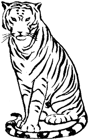 coloring pages of tigers free tiger coloring pages coloring home