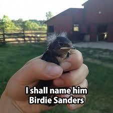 Cute Animals Memes - meet bernie sanders humor memes cute animals humor memes com