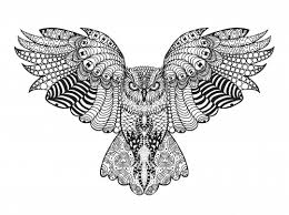 falcon advanced coloring page falcons coloring and zentangle